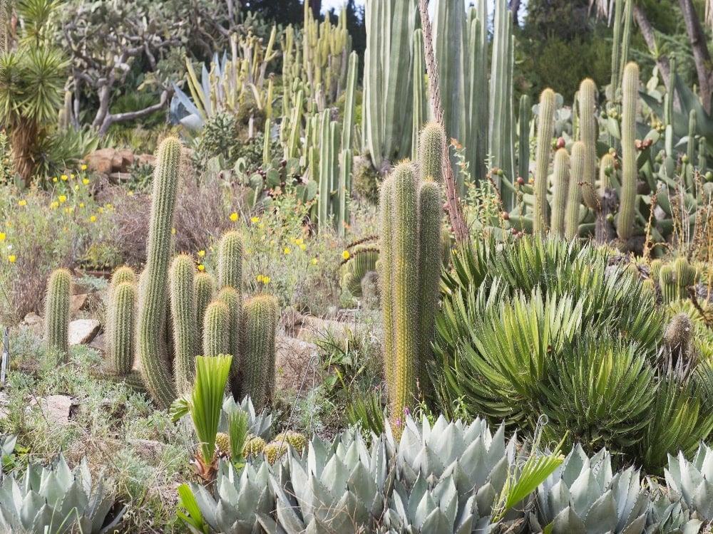 Cactus garden San Miguel de Allende