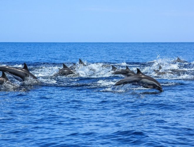 boat excursion to see the dolphins