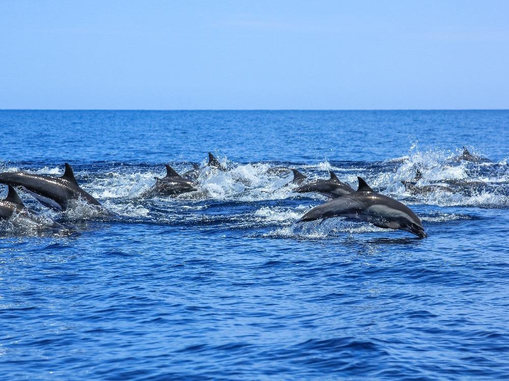Dolphins Puerto Vallarta